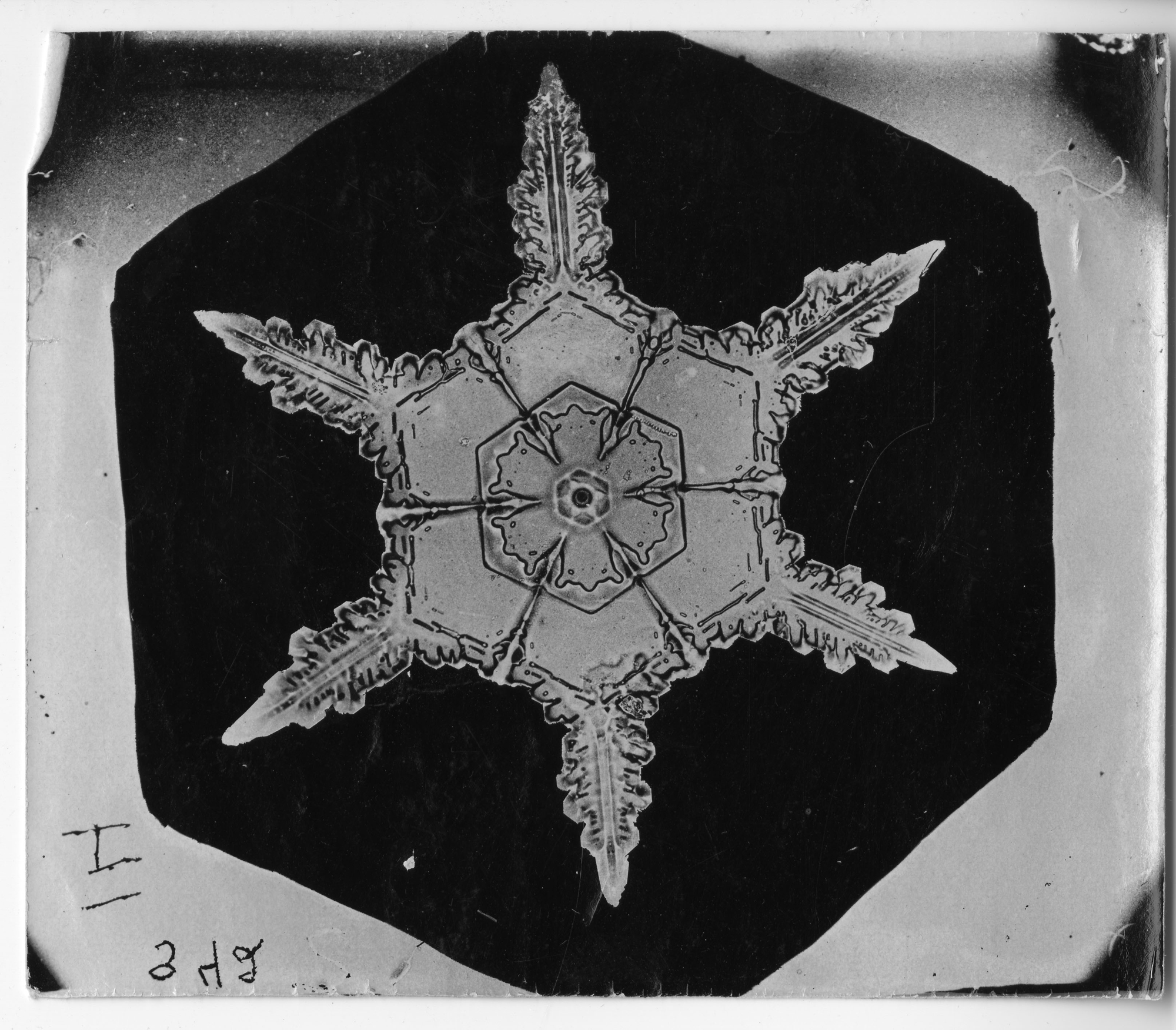 Snowflake Study, between 1890-1903, by Wilson A. Bentley, Smithsonian Institution Archives, Image ID