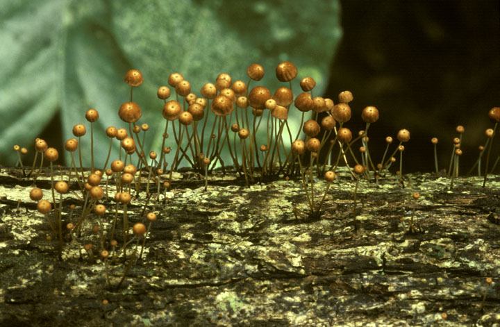 Fungus on bark, Smithsonian Tropical Research Institute, August 1986, by Carl Hansen, Color slide, S