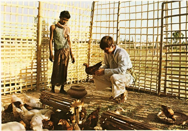 Peace Corps Volunteer in Nepal providing information about poultry breeding and raising, 1973, Smith